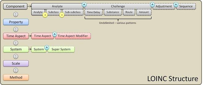 LOINC-structure